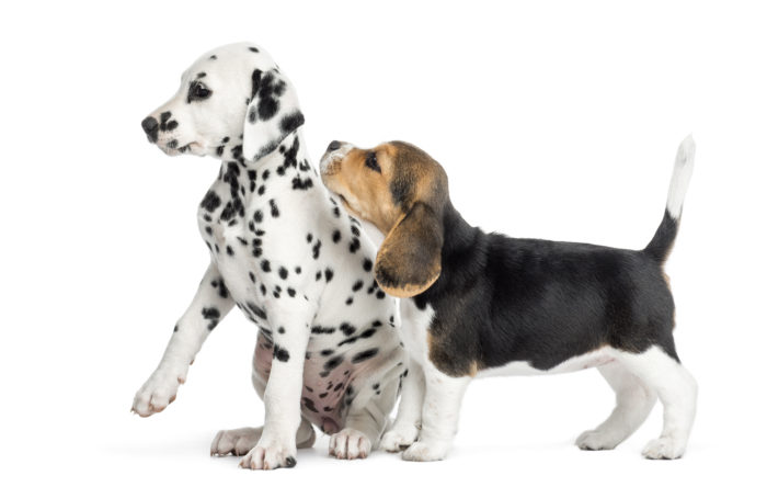 puppy training. puppy preschool