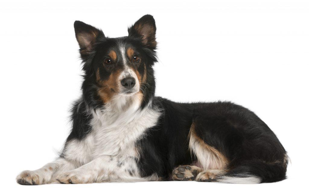 Private dog training, professional dog trainer