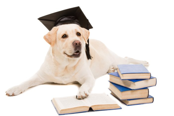 Dog Training Classes, Obedience classes