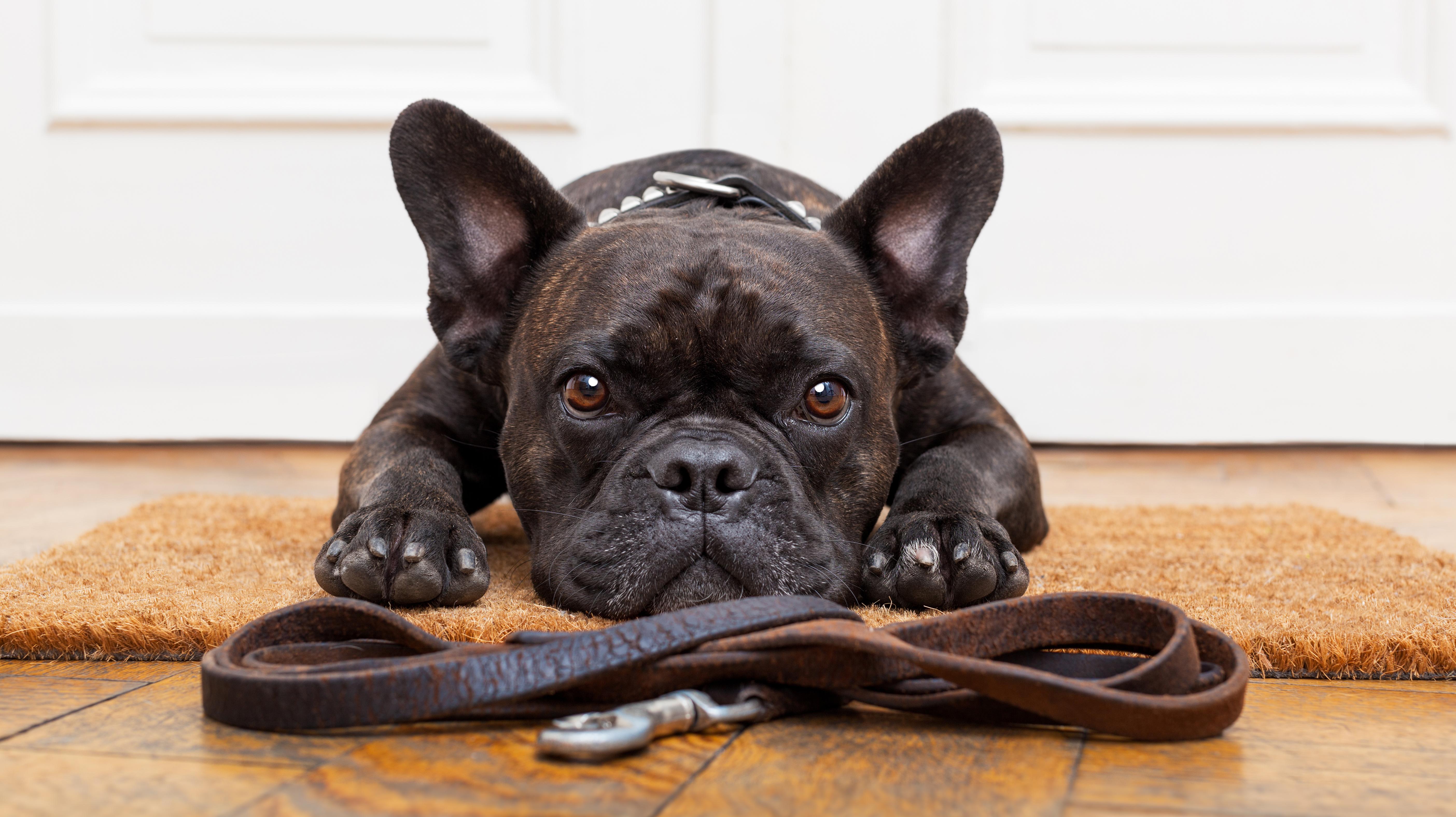 Private dog training, Behavioural training